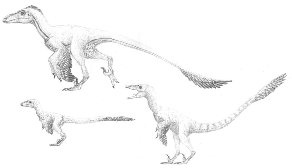 THE EPITOMIC DROMAEOSAURS by Sketchy-raptor