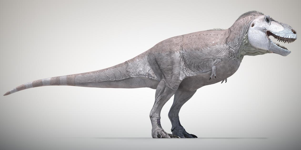 Tyrannosaurus rex 3D life reconstruction by Sketchy-raptor