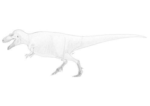 Gorgosaurus TCM 2011.89.1 Life Reconstruction