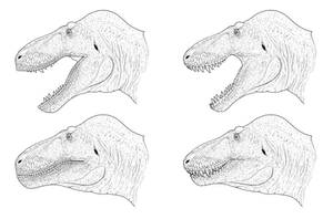 Tyrannosaurus Head Studies by Sketchy-raptor
