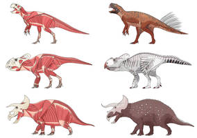 Ceratopsian Muscle Studies