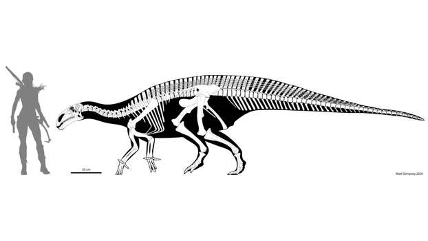 Mantellisaurus skeletal reconstruction