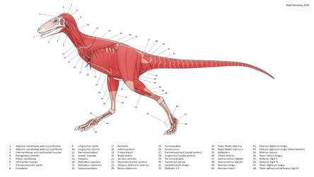 Juvenile Tyrannosaurid Anatomy by Sketchy-raptor