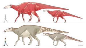 Big Monties - anatomical study of Edmontosaurus
