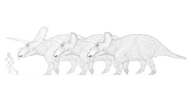 Triceratopsini Trinity