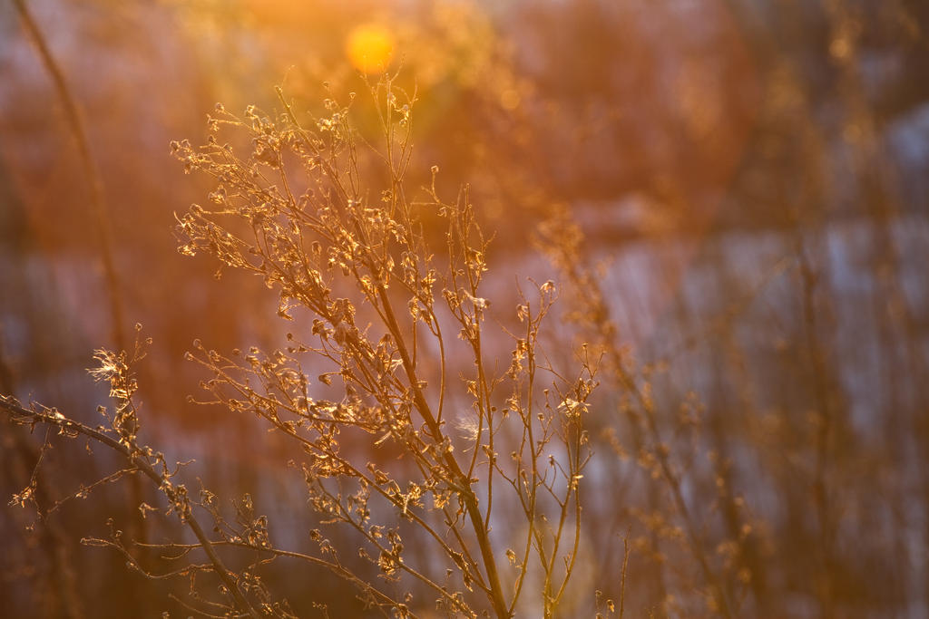 sun glow by Sealyanphoenix