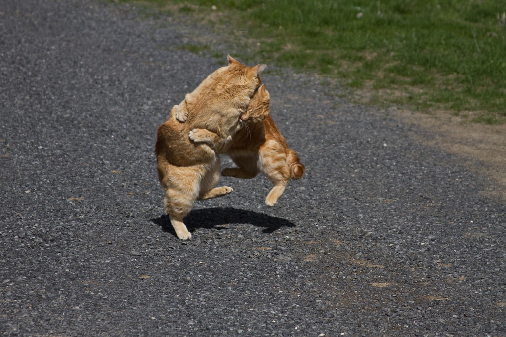 http://fc08.deviantart.net/fs70/i/2011/315/7/c/cat_attack_by_sealyanphoenix-d4ft92m.jpg