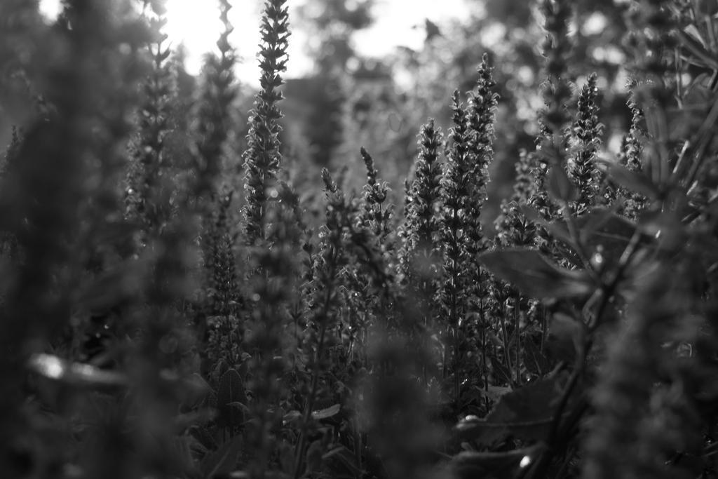 Grey Jungle by Sealyanphoenix
