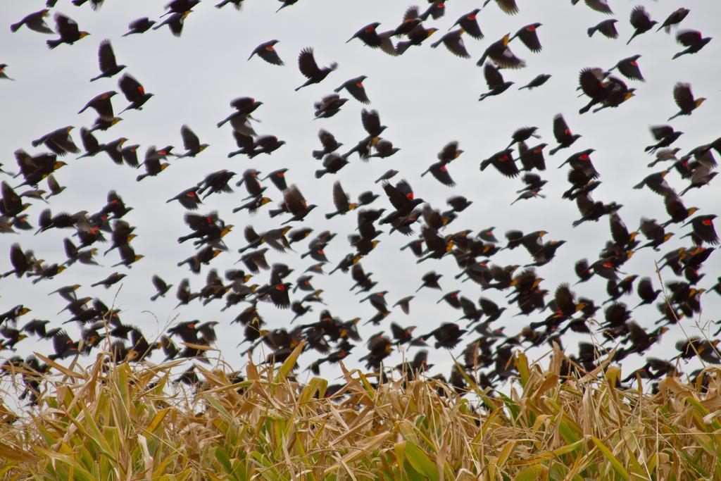 The Flock by Sealyanphoenix