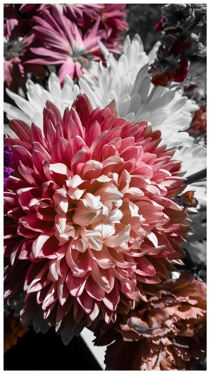 Pretty in Pink by Sealyanphoenix