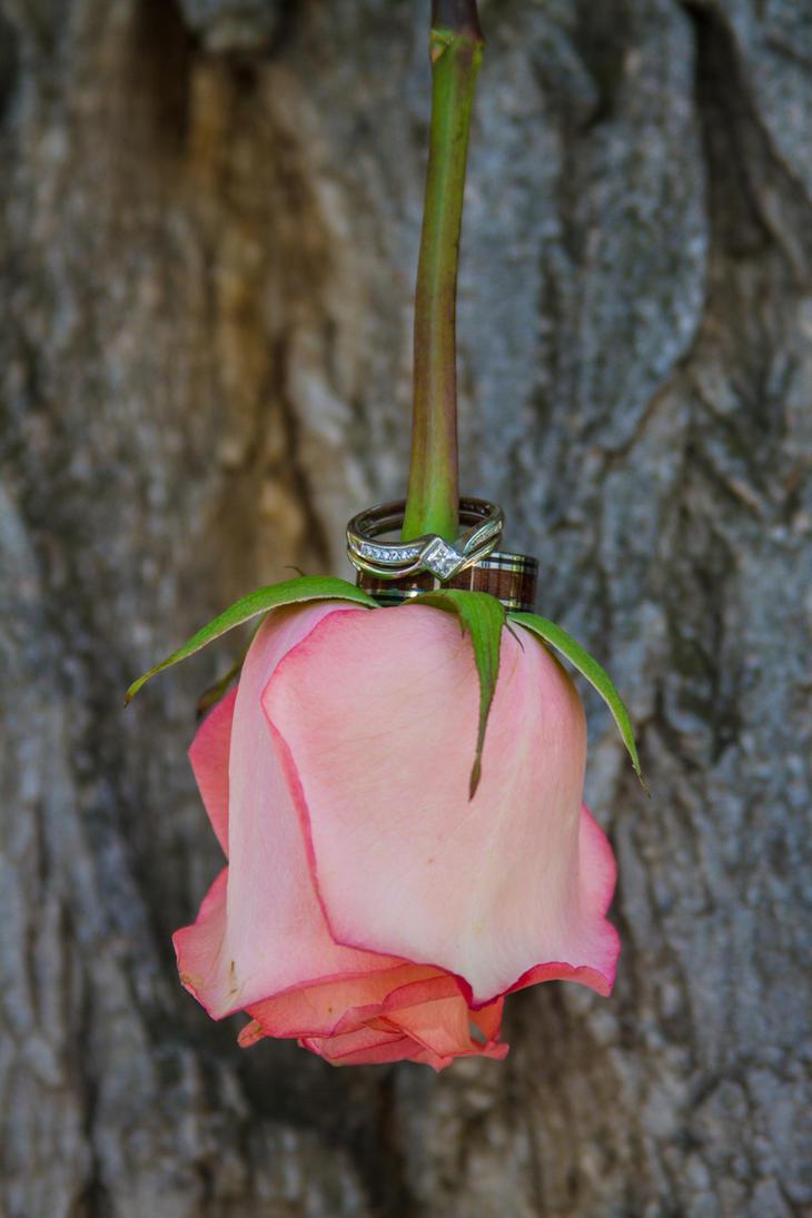 Rose Rings by Sealyanphoenix