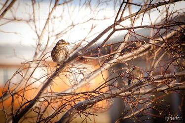 birdie by marchefkowy-potfor