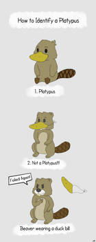 How to Identify a Platypus