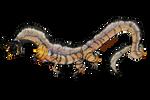 Golden Dragon Aardwolf Design Trade For Haykaru by Jesseth