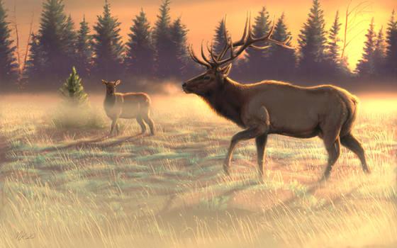 Elk Gold 1