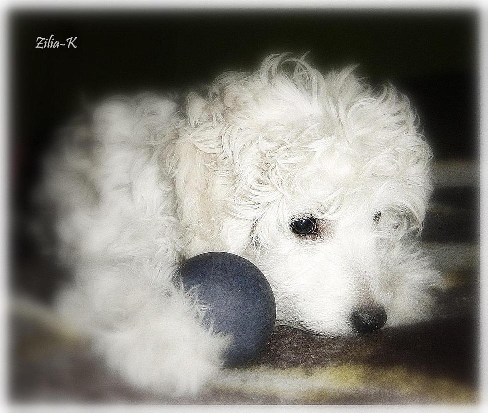 Little puppy by zilia-k