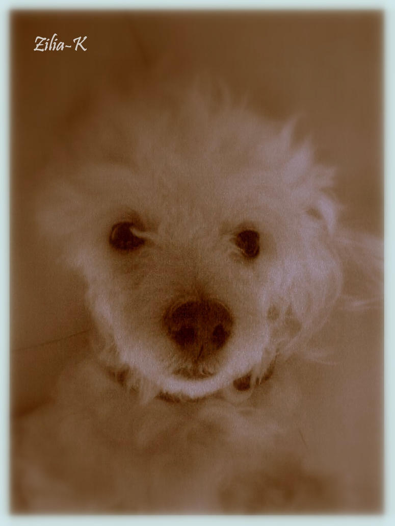 My cute dog by zilia-k