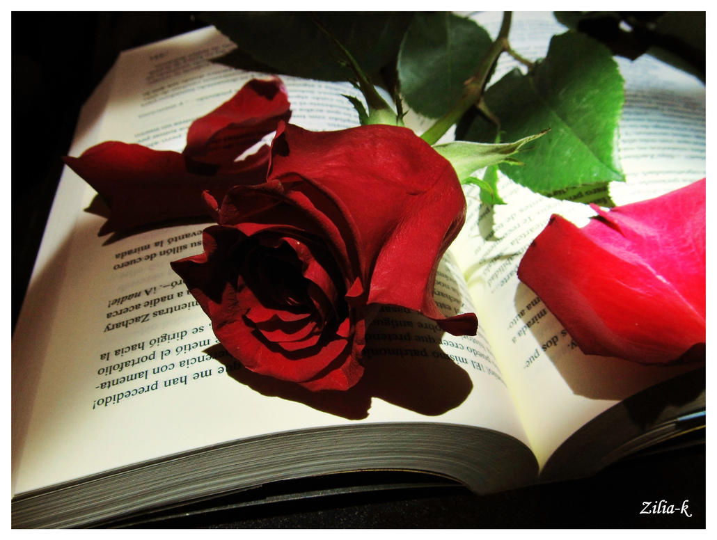 Rose and book by zilia-k