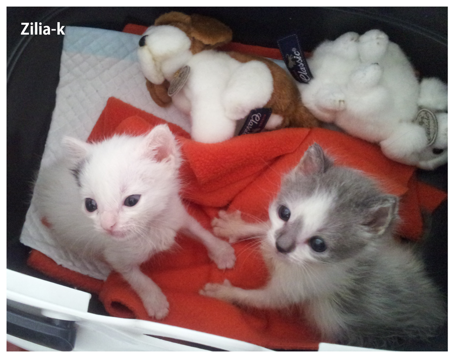 Little Kittens by zilia-k