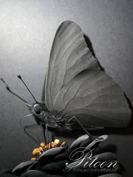 Black Paper Sculpture - Butterfly