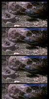 Rattlesnake at 1000fps by KellyJane