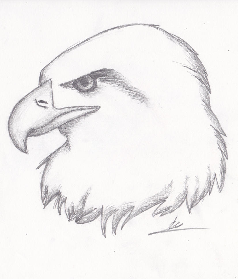 Realistic Eagle Sketch by Nightkitsune9 on DeviantArt