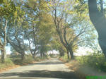 Beauty Road