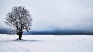 Calm before snow storm