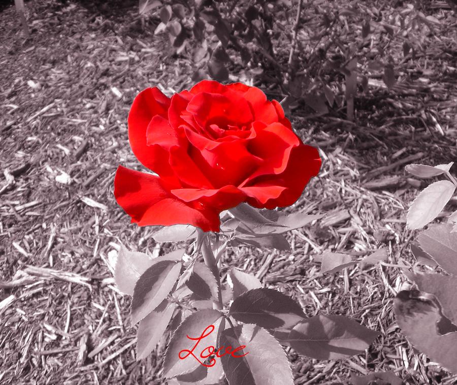 CVECE - Page 3 Love_by_crystallinesugar-d3l1wc9