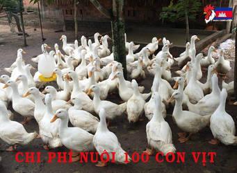 Chi-phi-nuoi-100-con-vit-1 (1)
