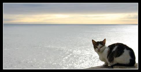 Looking away... by sonhador