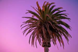 Fruity Palm