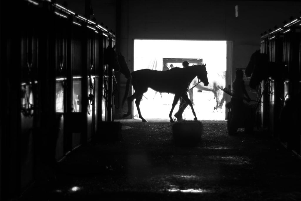 Cooling Down at the Barns by lonnietaylor