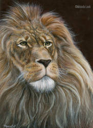 Lion (painting) by RedCoaster