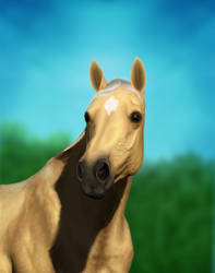 Palomino Portrait Commission