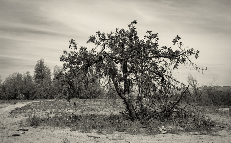Desolation by missdolkapots