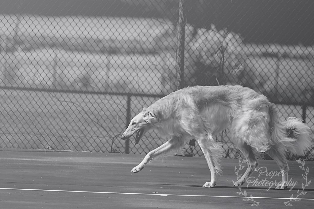 Graceful Hound by NoelleBabinski