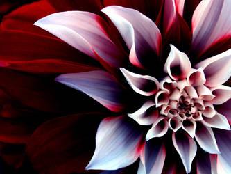 flower by bubbles238