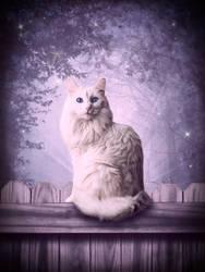 White Cat by Papillon-Noir-Art