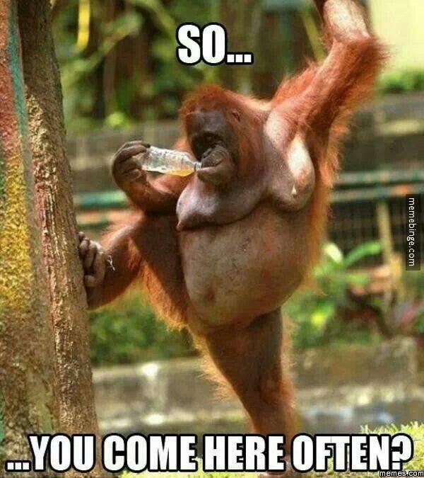 ugly monkey...