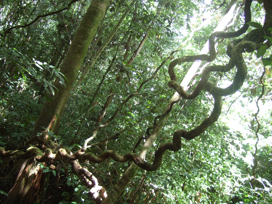 Jungle Vines by Faith-giver on DeviantArt