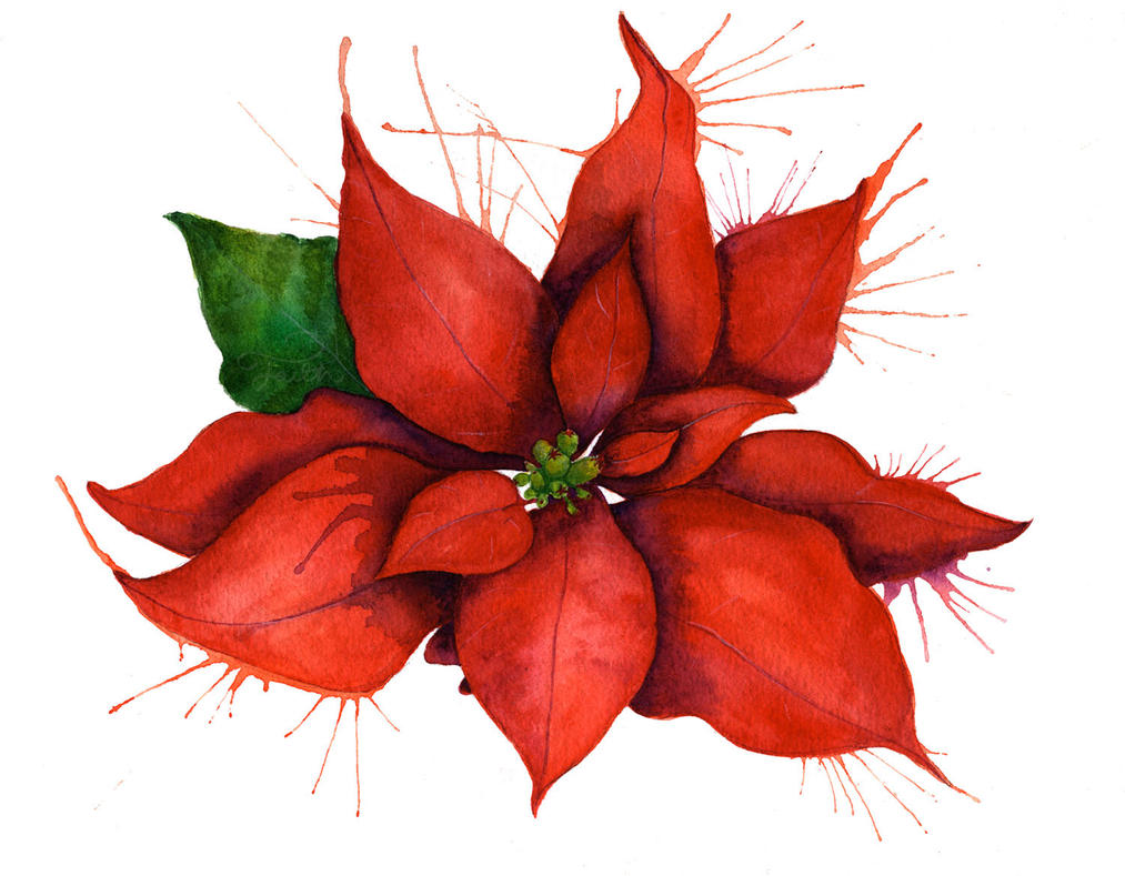 ... Clipart , Poinsettia Drawing Outline , Poinsettia Coloring Page