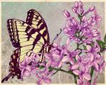 Lilacs Comish