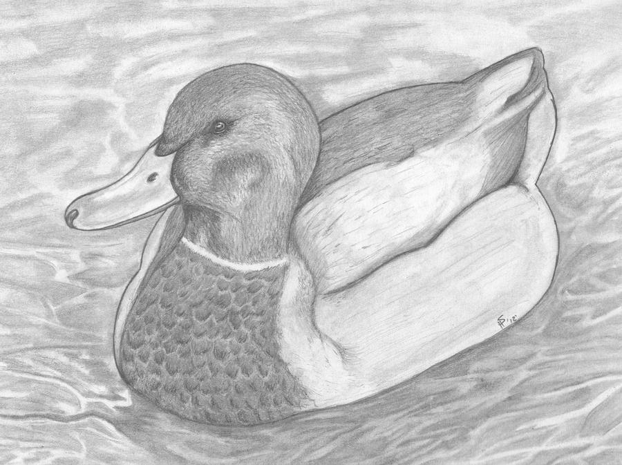 Mallard Duck.. by KieraKittie on DeviantArt