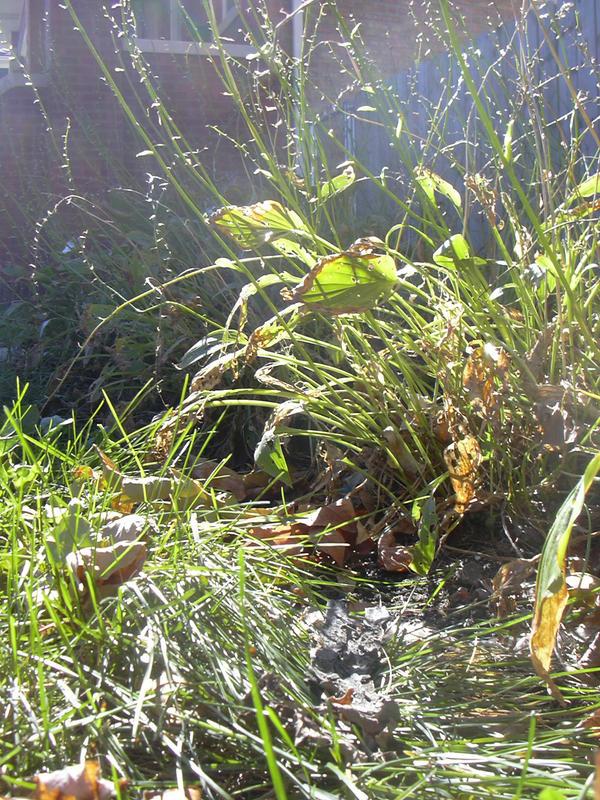 SAN07 13 - Grass 2 by yana-stock