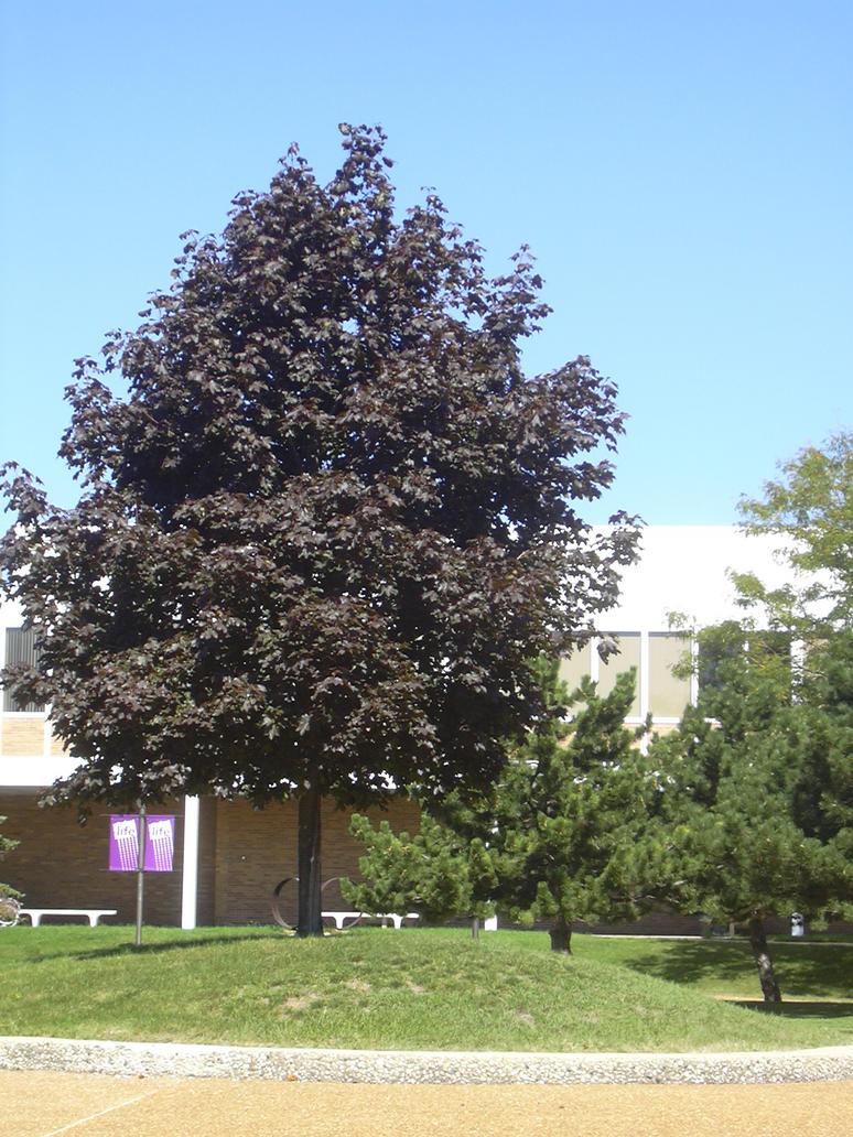 school courtyard 1 by yana-stock