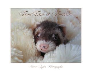 FrouFrou et Fourrure by Yukkabelle