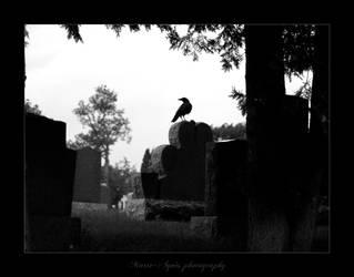 The Black Bird I by Yukkabelle