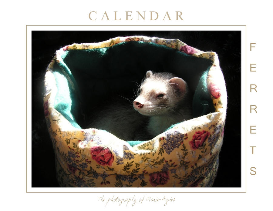 Ferrets Calendar -1-
