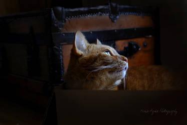 The Prayer's Cat by Yukkabelle